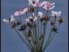 Fuglereservatet 2011-08-21 - Flora V