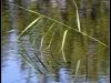 Fuglereservatet 2011-08-21 - Flora VII
