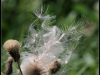 Fuglereservatet 2011-08-21 - Flora