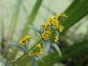 en-gul-blomst