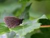 en-sommerfugl-ii