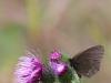 en-sommerfugl-iii
