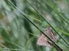 en-sommerfugl