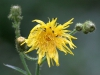 en-vaad-blomst