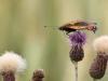 de-foerste-sommerfugle-4