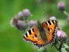 de-foerste-sommerfugle