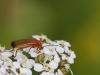 insekter-5