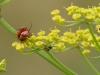insekter-ii-2