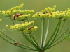 insekter-ii-4