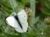 insekter-ii-5