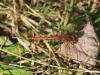 karlstrup-guldsmed
