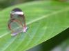 sommerfugl-2