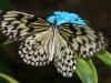 sommerfugl-9