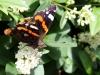 sommerfugl-ii-1
