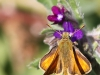 butterfly-iii