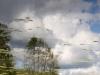 vaade-skyer