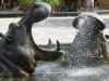 Flodheste