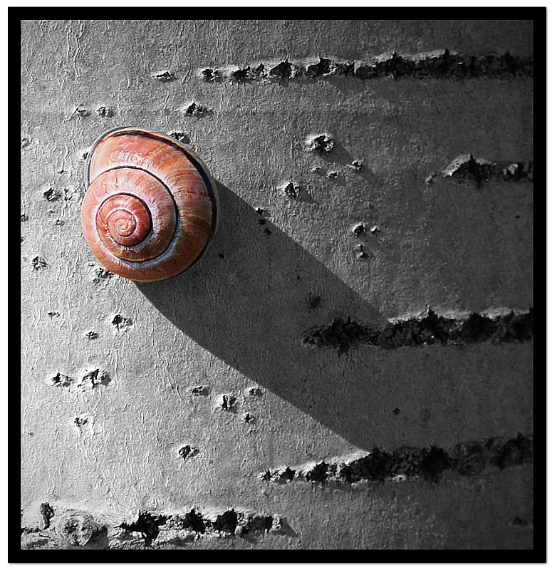 Snail and shadow II