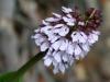 Blomst II