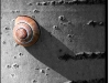 Snail and shadow