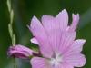 hvilken-blomst