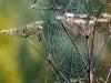 karlstrup-wet-wet-web