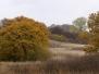 Skoven 25.10.2009