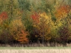 Efterårets farver