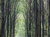 Skoven nu