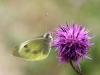 Kaalsommerfugl I