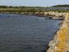 Thorhamns udde naturreservat