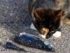 Sydhavnen - Hvad så fiskefjæs