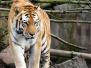 Zoo 14-09-2009