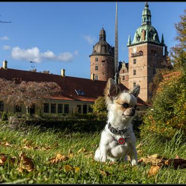 Hunden og slottet